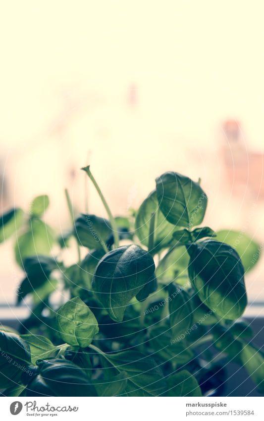 frisches bio basilikum grün Gesunde Ernährung Leben Essen Gesundheit Lebensmittel Wohnung Häusliches Leben Blühend Kochen & Garen & Backen Fitness