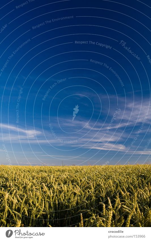 Weizenmeer Himmel Sommer Wolken Ernährung Feld Lebensmittel Stengel Landwirtschaft reif trocken Korn Ackerbau Samen ökologisch Weizen Ähren