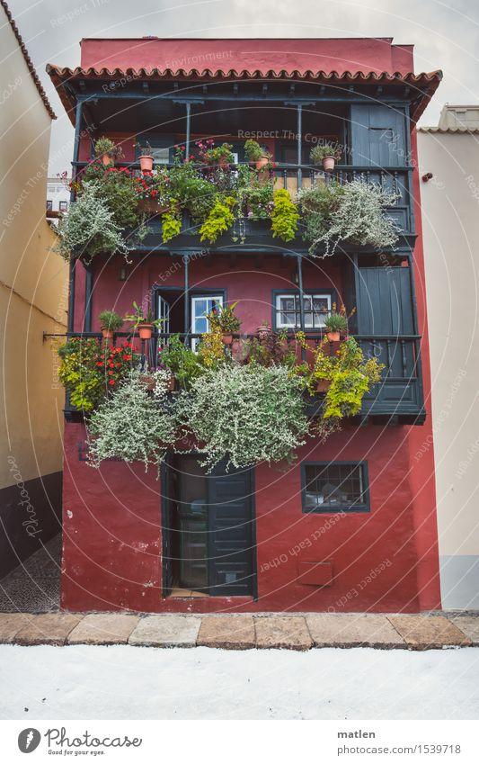 Gewächshaus Pflanze Frühling Farn Blatt Grünpflanze Stadt Menschenleer Haus Einfamilienhaus Architektur Mauer Wand Treppe Fassade Balkon Fenster Tür