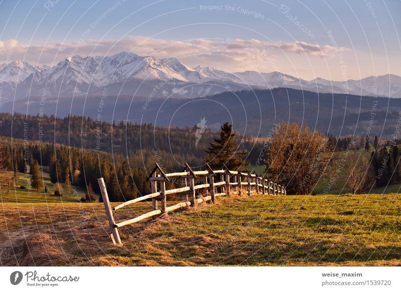 Frühlingslandschaft in Tatras-Bergen, Süd-Polen Himmel Natur Ferien & Urlaub & Reisen schön grün Baum Sonne Blume Landschaft Wolken Wald Berge u. Gebirge gelb