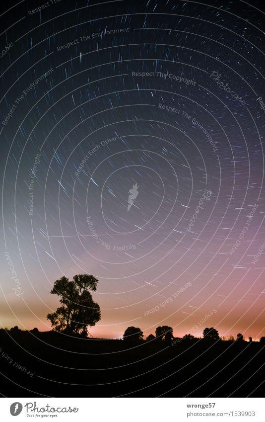 Nachtflug Himmel Natur blau weiß Baum Landschaft Ferne schwarz Horizont Luft Erde hoch Stern Schönes Wetter Unendlichkeit Weltall