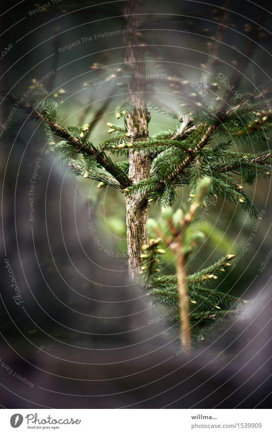 verstecktes sprießertum Baum Nadelbaum sprießen Frühling Fichte Tanne Schonung Wald grün Freiheit Durchblick Loch Netz Voyeurismus Forstwirtschaft Fluchtweg