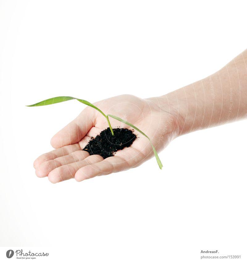 Naturfreund Natur Hand grün Pflanze Wachstum Mensch Vergänglichkeit Landwirtschaft Umwelt Umweltschutz Trieb Gärtner Keim Jungpflanze umweltfreundlich Reifezeit