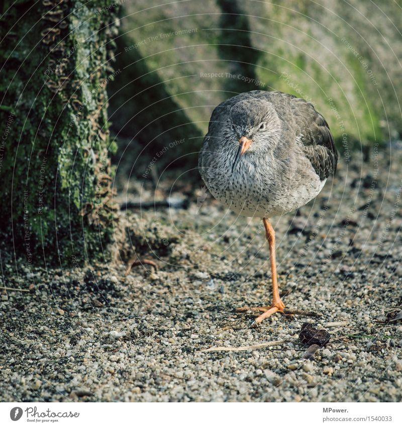vogel eins Tier Vogel 1 stehen Einsamkeit warten einbeinig Zoo Strand Sand lustig Farbfoto Außenaufnahme Nahaufnahme Textfreiraum unten Schatten Kontrast