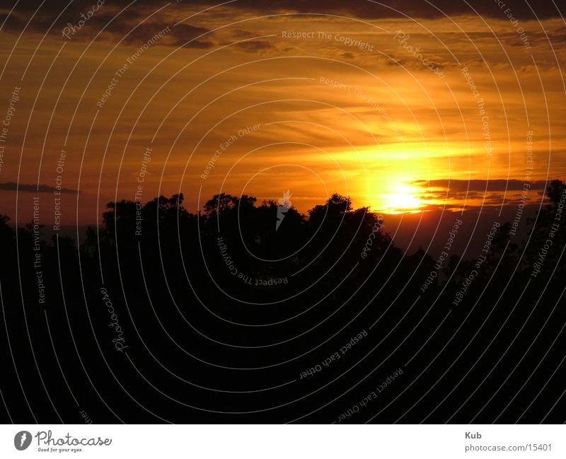 Abendsonne Himmel Baum Sonne rot schwarz Wolken dunkel Stimmung gold