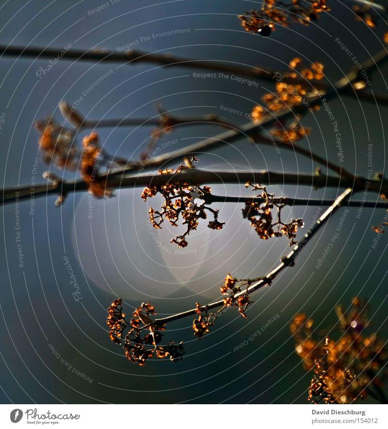 Gold in den Ästen Farbfoto Außenaufnahme Nahaufnahme Detailaufnahme Makroaufnahme Strukturen & Formen Morgen Morgendämmerung Tag Abend Dämmerung Licht Schatten
