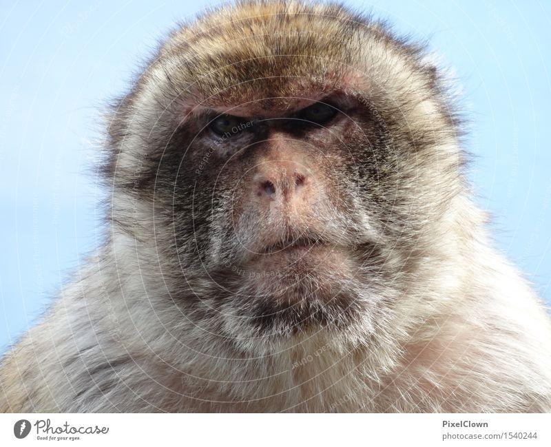 Der Blick Einsamkeit Tier Umwelt Traurigkeit Gefühle grau Wildtier exotisch Zoo