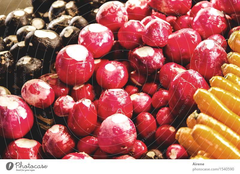 Back to the Roots Lebensmittel Gemüse Radieschen Rüben Möhre Rohkost Wurzelgemüse Ernährung Bioprodukte Vegetarische Ernährung frisch Gesundheit glänzend kalt
