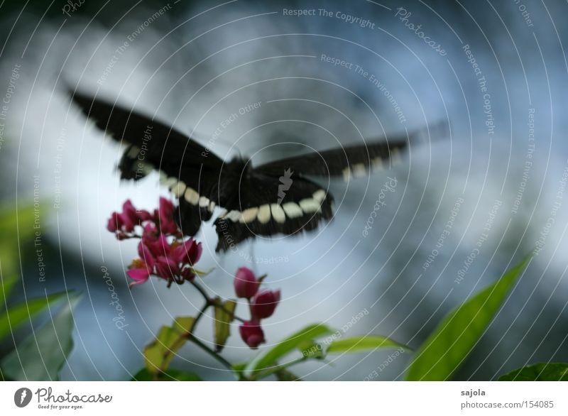 abflug Luftverkehr Blume Blüte Schmetterling Flügel Bewegung fliegen rosa Insekt Dynamik flattern zart Farbfoto Schwarzweißfoto Nahaufnahme Makroaufnahme