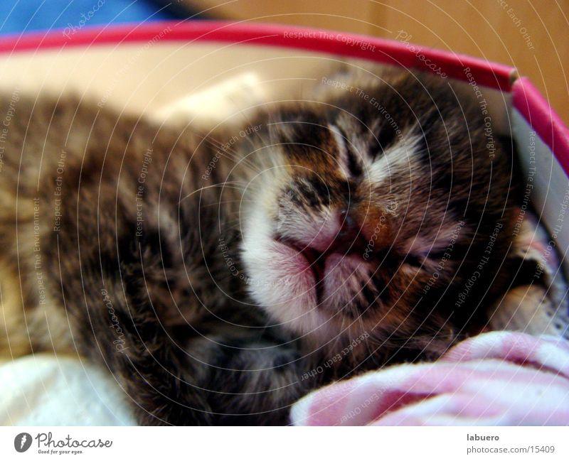 Findelkind Welpe Katze findelkind Tierjunges