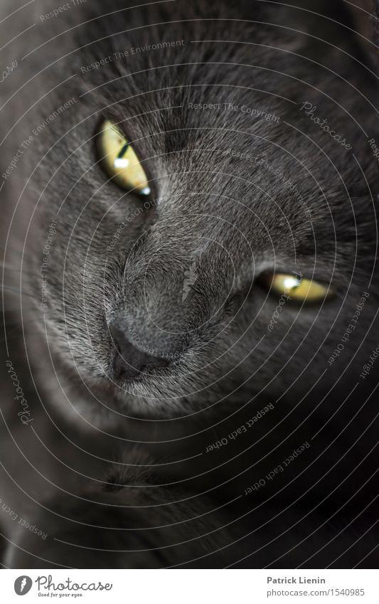 Schau mir in die Augen schön Gesicht Erholung ruhig Haus Frau Erwachsene Freundschaft Natur Tier Pelzmantel Haustier Katze Tiergesicht 1 ästhetisch