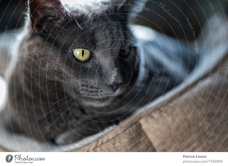 Watching You schön Gesicht Erholung ruhig Haus Frau Erwachsene Freundschaft Natur Tier Pelzmantel Haustier Katze Pfote 1 niedlich grau Akzeptanz Vertrauen