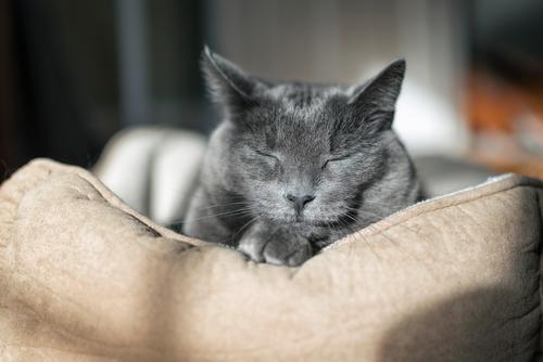 Sonnenbad Katze Frau Natur schön Erholung ruhig Tier Haus Gesicht Erwachsene grau Freundschaft niedlich schlafen Haustier