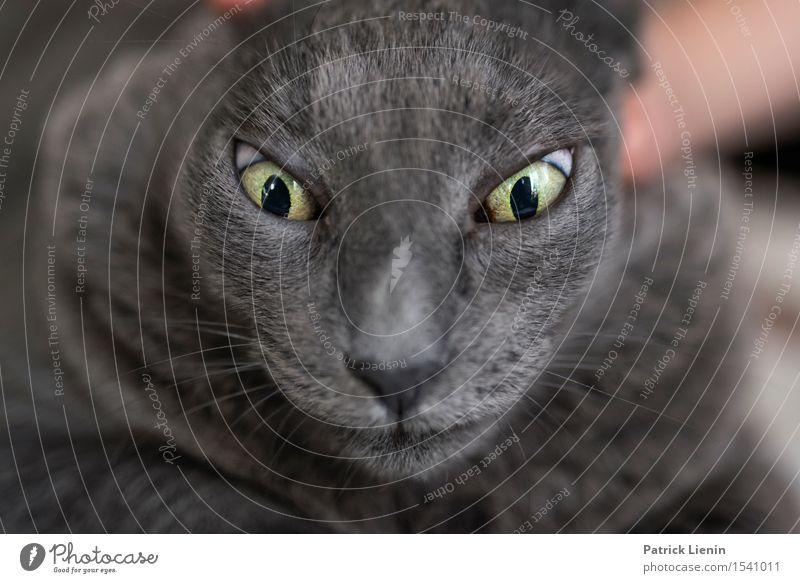 Scary Cat Katze Frau Natur schön Erholung Haus Tier ruhig Gesicht Erwachsene grau Freundschaft niedlich Haustier reizvoll Geborgenheit
