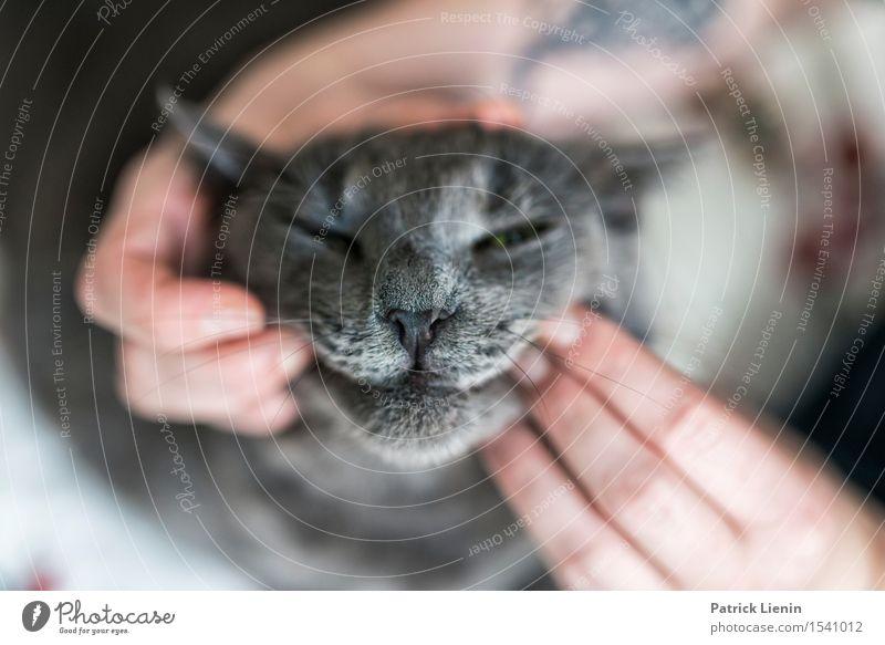 Joker Face Katze Frau Natur schön Hand Erholung Haus Tier Gesicht Erwachsene grau Freundschaft elegant stehen Kreativität Finger
