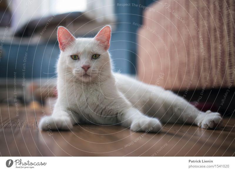 King of the Castle schön Gesicht Erholung ruhig Haus Freundschaft Natur Tier Pelzmantel Haustier Katze Tiergesicht Pfote 1 niedlich wild weiß Geborgenheit