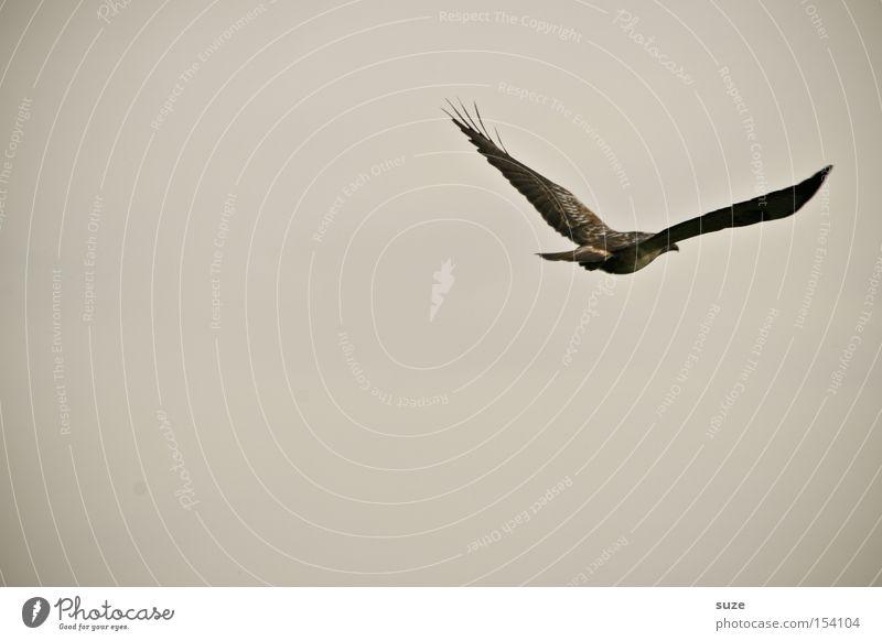 Abflug Jagd Umwelt Natur Pflanze Tier Urelemente Luft Himmel Wolkenloser Himmel schlechtes Wetter Nebel Wildtier Vogel 1 Zeichen fliegen ästhetisch Bewegung