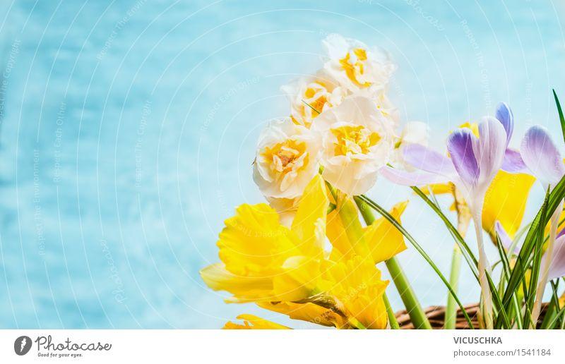Frühlingsblumen auf türkis blauem Hintergrund Natur Pflanze Blume Blatt gelb Blüte Frühling Stil Garten Feste & Feiern Design Dekoration & Verzierung Geburtstag Blühend Ostern Blumenstrauß