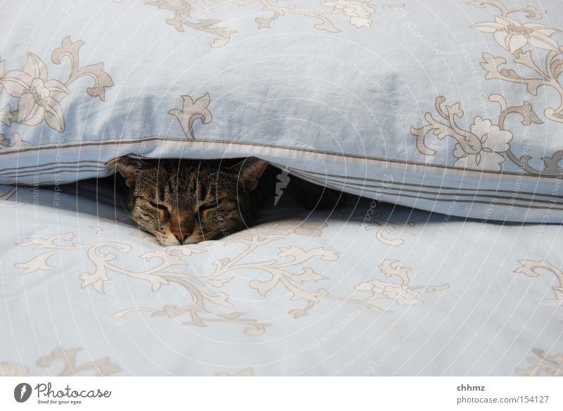 dösen Katze Wärme Zufriedenheit schlafen Bett weich Gelassenheit gemütlich Säugetier kuschlig Hauskatze bequem zudecken Halbschlaf Katzenkopf