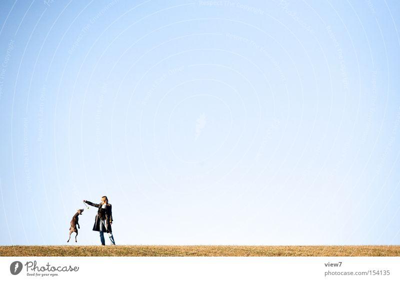 ... hol ihn dir! Himmel Hund Sommer Freude springen laufen fliegen Luftverkehr Bodenbelag Ball Rennsport Momentaufnahme werfen Säugetier Sonnenlicht