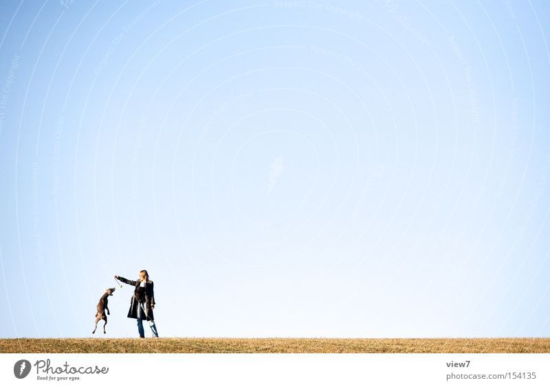 ... hol ihn dir! Hund Sommer Himmel werfen apportieren laufen Rennsport Licht springen Ball fliegen loslassen Sonnenlicht Bodenbelag Freude Säugetier loslaufen
