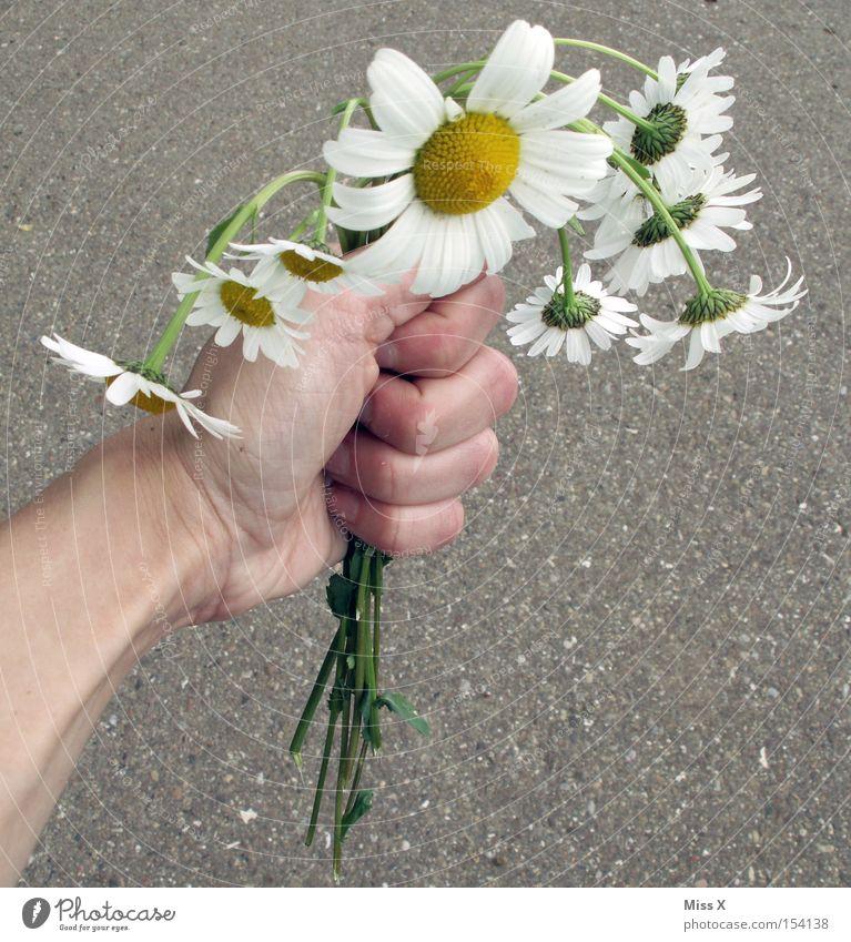 Ein bunter Strauß Hand Blume Pflanze Sommer Frühling Geschenk kaputt Müdigkeit Blumenstrauß hängen Gänseblümchen Margerite Valentinstag flau welk