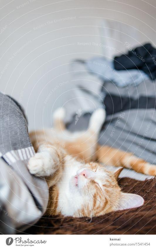 Catcontent | Dornröschen Häusliches Leben Wohnung Bett Schlafzimmer Haustier Katze Tiergesicht Fell Pfote 1 Erholung liegen schlafen träumen niedlich