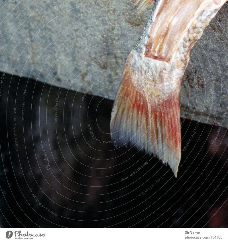 48 [catching the tail end] Tod Beton Ernährung Vergänglichkeit Fisch Gastronomie Ende Fleisch töten Fischgräte häuten Fischmarkt Schlachtung Schweinefilet