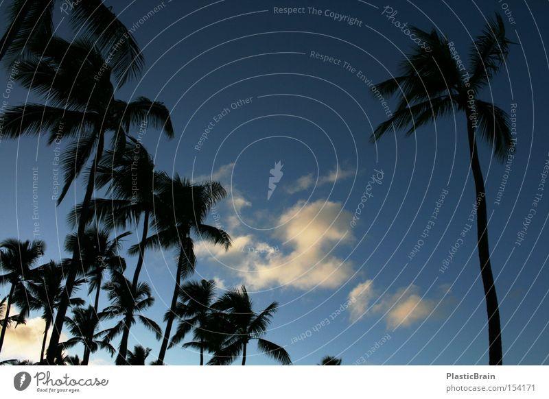 Einsamkeit Palme Gegenlicht Himmel blau tropisch Wolken Silhouette Blauer Himmel aufwärts Froschperspektive himmelwärts Dämmerung