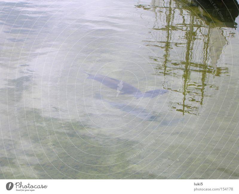 ship reflection Wasser Wolken Wasserfahrzeug Fisch Segelschiff