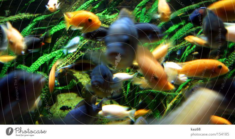 Meeting Fisch Meer See Wasser mehrfarbig Aquarium Im Wasser treiben tauchen Leben Verabredung mehrere Riff Ernährung viele Schwimmen & Baden