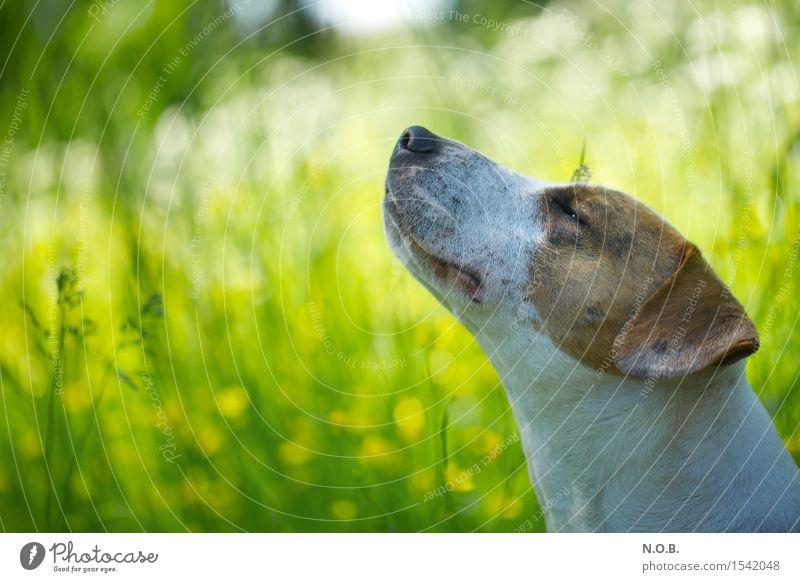 Es riecht nach Frühling Hund Natur grün Sommer Blume Tier Freude Gras Glück hell Zufriedenheit frisch genießen Lebensfreude Schönes Wetter