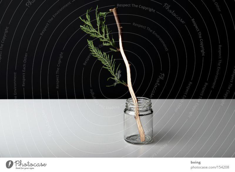 Bürohecke schön Glas Teilung Zweig Hecke Wurzel verdreht Zimmerpflanze Topfpflanze Gärtnerei Zypresse veredeln Blitzschlag Immergrün Immergrüne Pflanzen