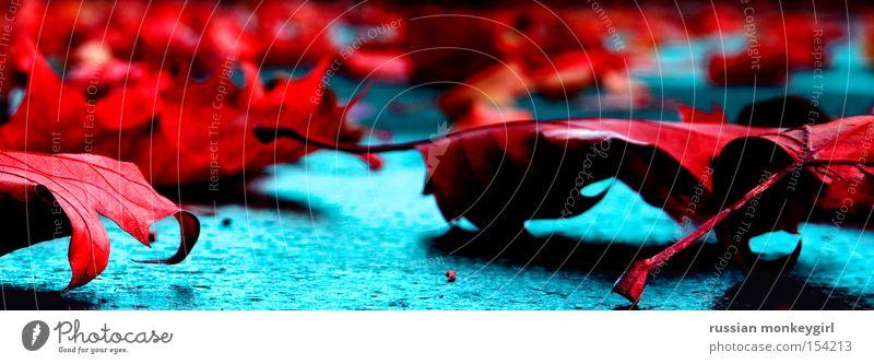 blutrot Natur Pflanze rot Blatt Straße Farbe Herbst Tod Traurigkeit Trauer Bodenbelag Verzweiflung Blut Gefühle unnatürlich