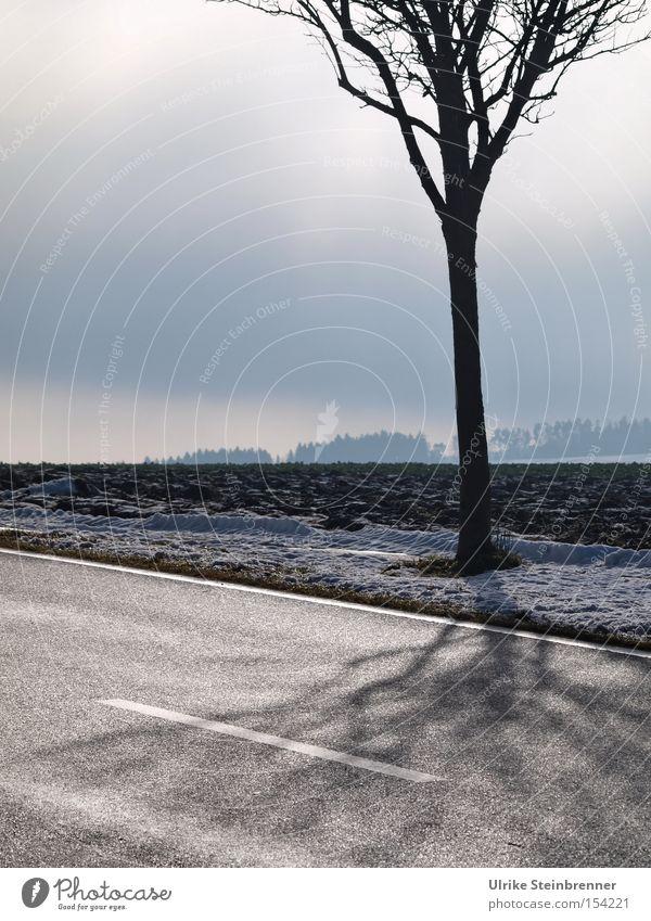 Kahler Baum am Straßenrand vor Winterhimmel Farbfoto Gedeckte Farben Außenaufnahme Menschenleer Textfreiraum links Textfreiraum oben Tag Schatten Sonnenlicht