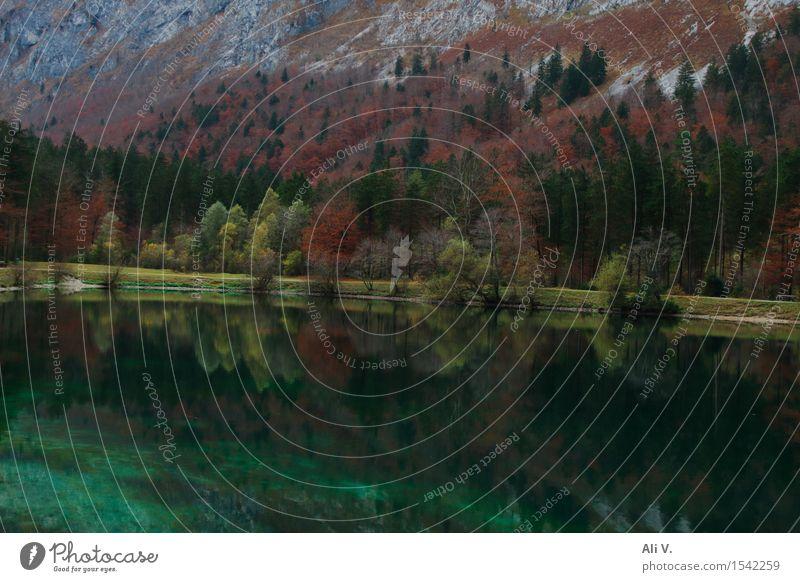 Spiegelungen Natur Landschaft Wasser Herbst Baum Gras Sträucher Wald Felsen Berge u. Gebirge Seeufer braun grau grün rot Stimmung Farbfoto Außenaufnahme
