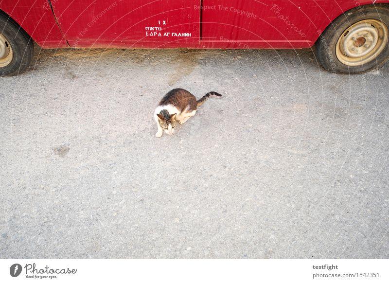 katzenfoto (das erste, einzige und letzte) Straße PKW Tier Haustier Wildtier Katze 1 hören Jagd Blick warten rot Mitgefühl achtsam Wachsamkeit Neugier Farbfoto