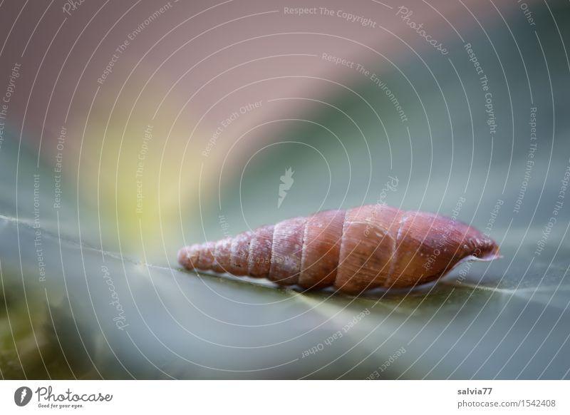 Traumhäuschen Natur Pflanze Blatt Schnecke liegen ästhetisch außergewöhnlich einfach braun grün ruhig Einsamkeit Design skurril Surrealismus Strukturen & Formen