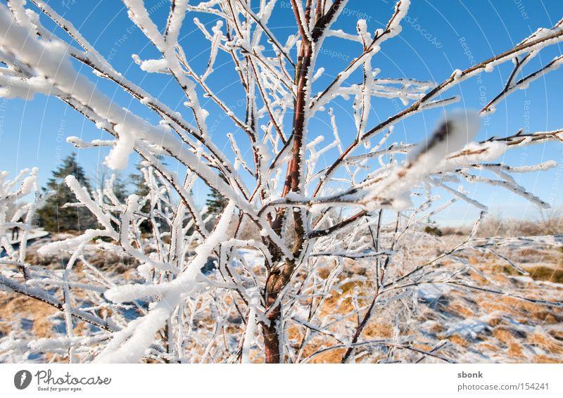 Mikado Himmel blau Winter kalt Schnee Ast gefroren Weide himmelblau