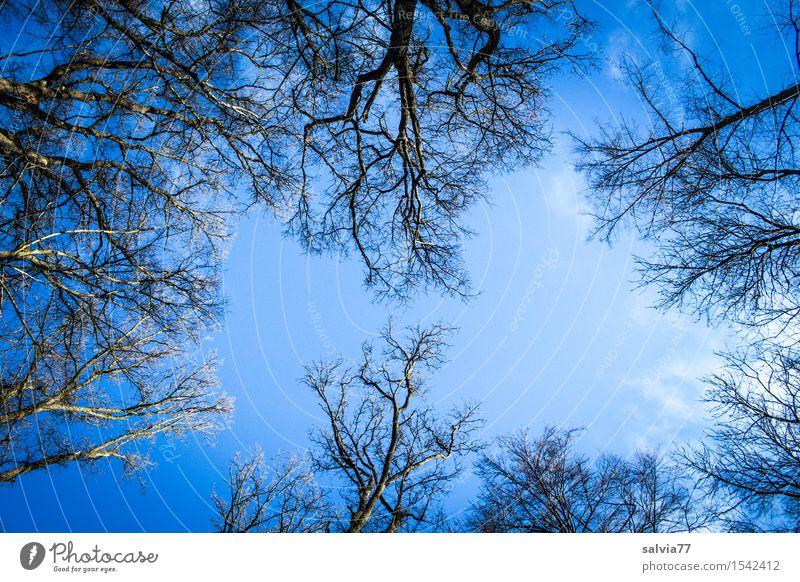 blaumachen | dem Rauschen lauschen Umwelt Natur Pflanze Himmel Wolkenloser Himmel Frühling Herbst Klima Wetter Schönes Wetter Baum Wald beobachten Erholung