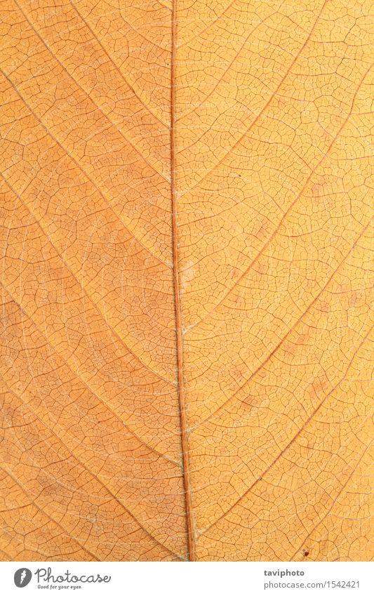 Makroaufnahme des verblichenen Blattes Natur Pflanze Herbst alt Wachstum braun gelb gold rot Farbe Oktober Jahreszeiten Venen texturiert Konsistenz Hintergrund