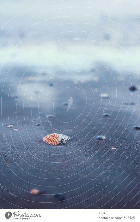 Farbtupfer im Watt Umwelt Natur Erde Sand Wasser Küste Strand Nordsee nass natürlich blau Reflexion & Spiegelung Muschel Wattenmeer Herzmuschel Meeresfrüchte