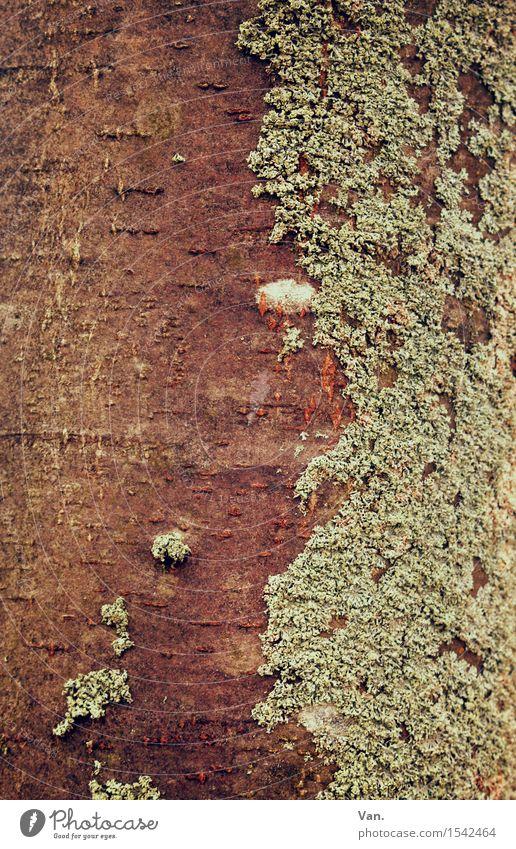 gespaltene Persönlichkeit Natur Pflanze Herbst Baum Moos Baumstamm Flechten braun grün Baumrinde Holz Farbfoto Gedeckte Farben Außenaufnahme Nahaufnahme