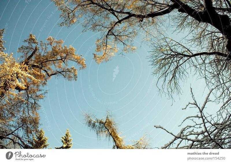 EIN BLICK ERHOLUNG Baum Blatt Ast Baumkrone Himmel Schönes Wetter Schnee kahl Winter schön Sonnenstrahlen Idylle pflanzen bio verwachsen