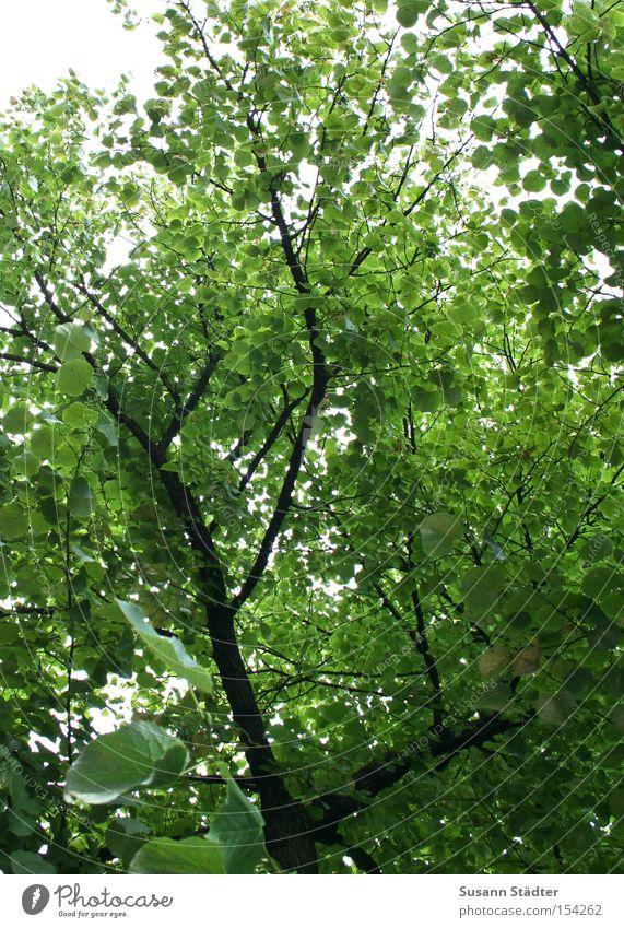 Hans guck in die Luft! Baum grün Sommer Blatt Wald träumen Wärme Arme Ast Baumkrone Zweig