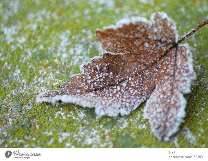 frozen Winter Blatt kalt Schnee Herbst Eis Frost gefroren frieren Makroaufnahme Kristallstrukturen