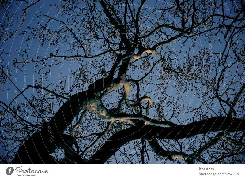 Verzweigt Himmel Baum blau Winter Ast silber Baumstamm Zweig