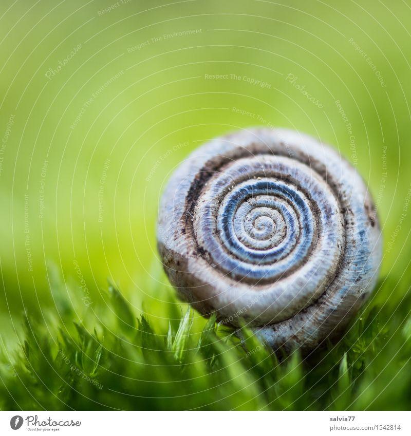 rund | weich gebettet blau grün Farbe Einsamkeit ruhig Tier natürlich Glück klein grau Design Idylle Schutz Spirale