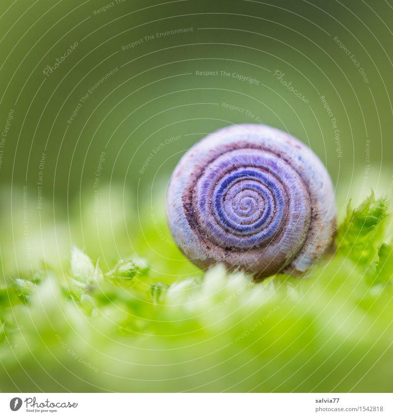 Häuschen im Grünen Natur Herbst Moos hell klein rund weich grau grün Stimmung Schutz Einsamkeit Design ruhig Symmetrie Spirale Schneckenhaus Waldboden