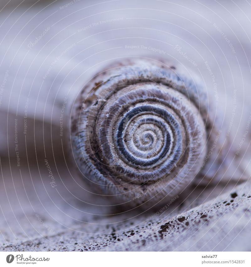 Zahn der Zeit Natur blau Blatt Tier Wald Herbst klein grau Design Erde Wildtier ästhetisch Vergänglichkeit rund Wandel & Veränderung nah